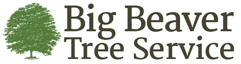 Big Beaver Tree Care